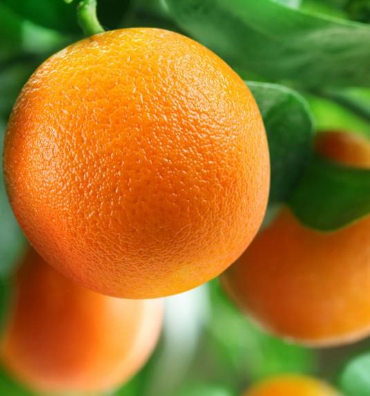 Navel & Valencia Oranges